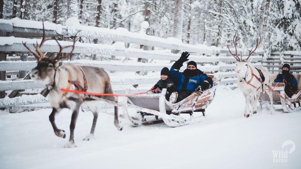 Reindeer tours in Rovaniemi
