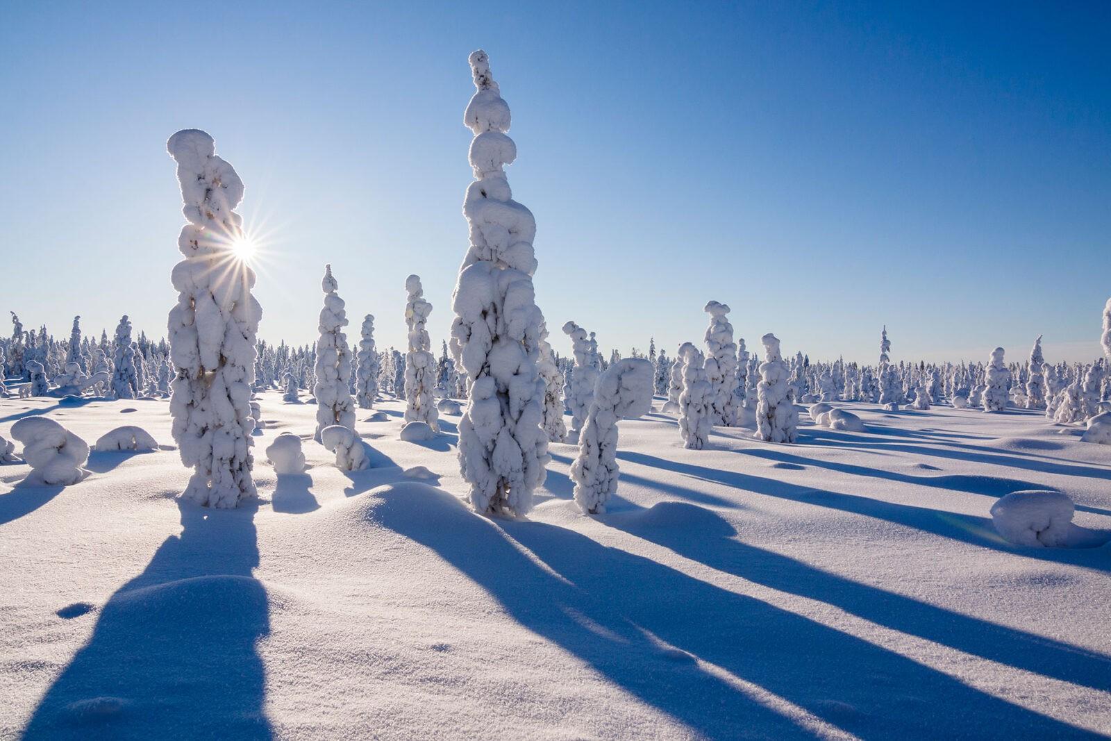 Forest in Rovaniemi
