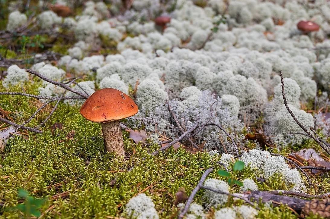 Mushrooms picking tour in Rovaniemi