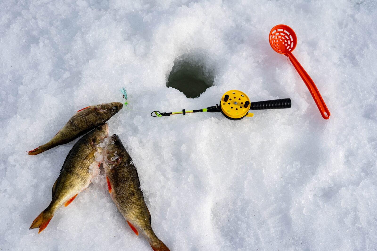 Ice fishing in Rovaniemi
